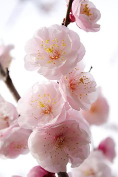 Springtime Photograph by Dina Silantyeva - Springtime Fine Art Prints and Posters for Sale