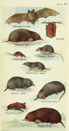 moles + bats