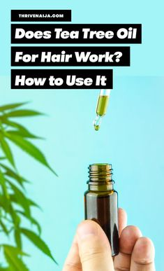 Tea tree oil is excellent for your hair and scalp as it contains anti-inflammatory and antimicrobial properties which are soothing to skin and wounds, tea tree oil can be used on oily and dry hair scalp to improve hair growth and there are other ingredients that could be added to it to make it more effective #teatreeoil #haircare