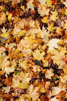Crunchy leaves.