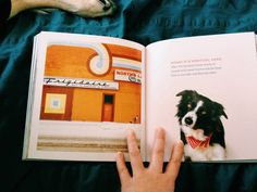 Find Momo the book - by Andrew Knapp - featured on The Row House Nest