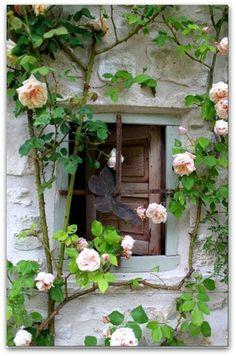 Garden window   Roses