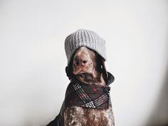 lights, hats, hipsters, anim, dogs