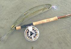 Bull trout released on Upper Pitt River, Mission BC fli fish, sport afield, fish porn, fish menageri, outdoor life, bull trout
