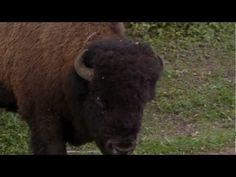 ▶ Travel Alberta Stories - YouTube