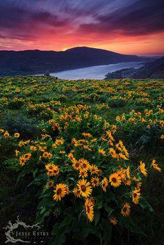 ✯ Sunset in Oregon