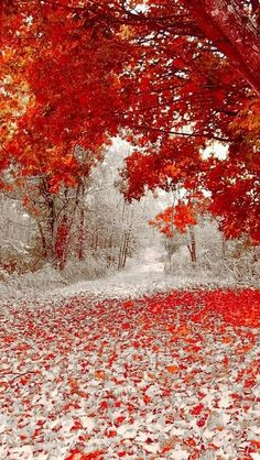 Winter and Fall