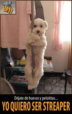 Humor and More: 659. Este debe ser el perro de Chiqui Martí, o de Ana y los 7....
