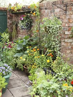 Put your deck or patio to work: grow vegetables and herbs in containers Small Patio Gardens, Hanging Plants, Small Garden Ideas Patio, Brick, Tiny Herb Garden, Herbs Garden, Deck, Patio Ideas, Container Gardening