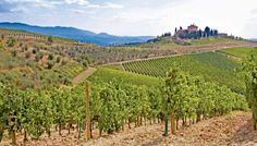 Tuscany Vineyard and