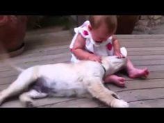 Watching This Puppy and Baby Work Together to Make Viral Video is Truly Inspiring!! (VIDEO) | EntirelyPets Blog