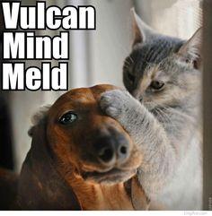 {Vulcan mind meld} ha!