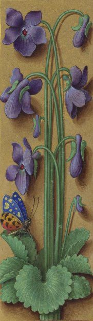 Viole. Dal Gran Libro d'Ore di Anna di Bretagna, 1503-1508. Parigi, Bibliothèque Nationale, ms Latin 9474, f. 60 (dettaglio). Miniature di Jean Bourdichon.
