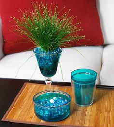 """Fiber optic grass gets its common name from wiry grassy leaves, which resemble fiber optic wire. It can even grow in standing water, adding fine texture to a shallow water garden. Or create a mini palm tree effect by wrapping a plastic tube around the base of the plant for the """"trunk,"""" allowing leaf tips to arch out of the tube as palm """"fronds."""""""