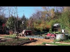 ▶ Urban Homesteading - Using Traditional Wisdom for an Urban Vegetable Garden - YouTube