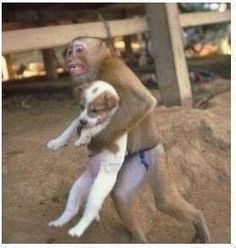 During a dangerous factory explosion that occurred in China, a monkey was recorded on the camera saving a puppy from the explosion site - he held the dog as he ran out of the factory... Instinctive compassion and kindness.