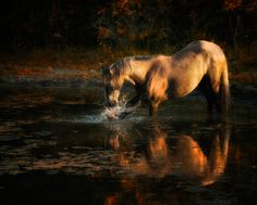 Photographer Ron McGinnis - Equine