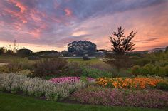Sunset at the Frederik Meijer Gardens. Image courtesy of Experience Grand Rapids.
