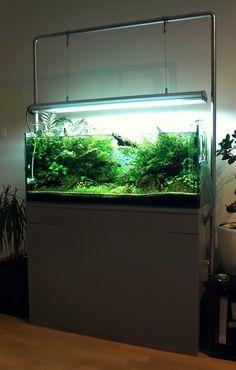 Aquascaping bzh par florianf. #aquascaping #aquarium