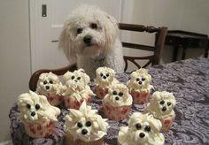 Doggy Cupcakes Lookalike anim, stuff, cupcakes, funni, food, recip, puppi, dog, thing