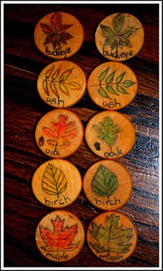 a leaf matching game of how the leaves look in spring and in autumn
