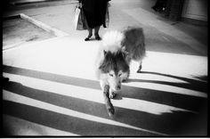 wolf by Marija Heinecke on 500px