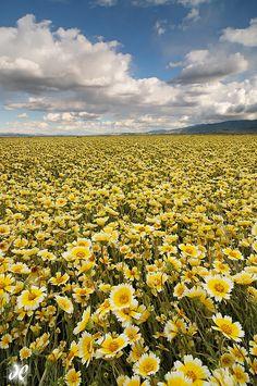 Field of Dreams - Carrizo Plain National Monument, California