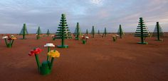 """The long standing LEGO brand is celebrating 50 years this year, and in celebration of their successes throughout their business the """"Festival of Play"""" was born. Part of that incorporates a life-sized installation in Australia.    The sparse Broken Hill desert has been updated for the next couple of weeks with some 'greenery' in the form of large scale legos. In place of the dirt covered grounds, there are life-sized pine trees and flowers– with the trees towering over 13 feet tall."""