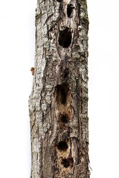 woodpecker holes (mary jo hoffman)