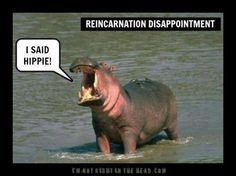 Reincarnation Disappointment...