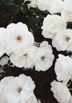 white gardens, white flowers, spring flowers, white roses, flower fashion, wedding flowers, spring. blooms, flower photos, spring blooms