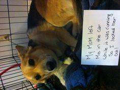 Dog shame!