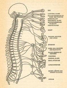 Your brain is connected to it all! I dream that everyone will know the importance of their spine!
