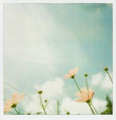 Vintage Polaroid Film Nature Photography  Hipster by Kristybee, $12.00