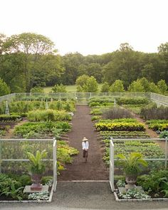 dream veggie garden