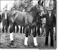 Seabiscuit (USA) 1933-1947 TB bay stallion. Hard Tack {Man o' War x Tea Biscuit by Rock Sand} x Swing On {Whisk Broom x Balance by Rebelais}
