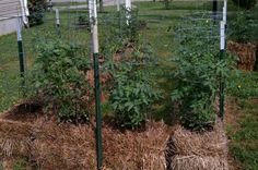 Straw Bale Gardens - time to try?