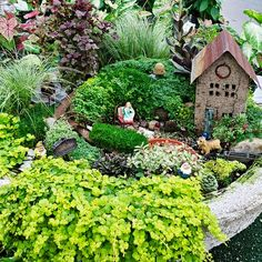 Fairy Garden Step-by-step instructions on BHG by Lou Killilea of DeMonye's Greenhouse in Columbus, OH