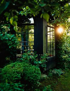 Looking through Conservatory windows in a green lush garden....