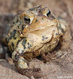 Build a Toad Abode