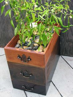 self-watering planter from found dresser drawers