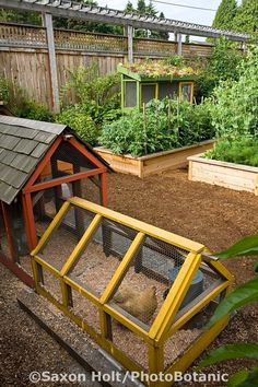 Neat and brightly colored chicken coop in Jennifer Carlson's urban garden, Seattle, Washington. Note: part of chicken coop is open aired and the other is sheltered by a shake roof. Saxon Holt Photography/PhotoBotanic Garden Library