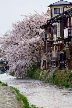 Spring in Kamo River, Kyoto, Japan