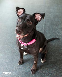 Five year old Delilah is our Pet of the Week! This active girl would love to join you on hikes and long walks. Learn more about Delilah here: http://www.aspca.org/blog/aspca-pet-of-the-week-delilah