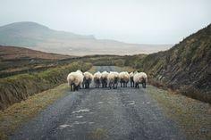 My favorite kind of traffic.