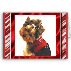 Dressed up Yorkie Note Card from Zazzle.com