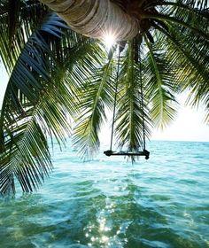 palm, tree swings, heaven, dream, the ocean, sea, the bahamas, beach, place