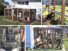 Outdoor Cat Enclosure - Take a tour of it.