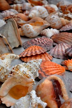 Sea Shells ... gifts from the sea