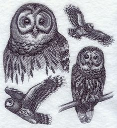 Barred Owl Sketch - machine embroidery designs